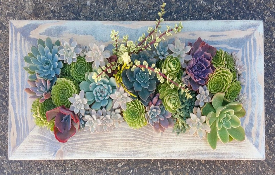 Succulent Ecosystem Class – hosted by the Mossbank Library